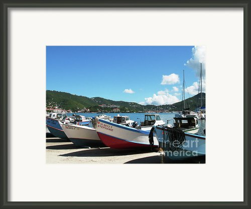 Hanging Out In St Thomas Framed Print By Corinne Rhode