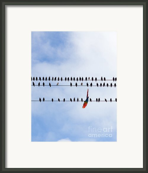 Hanging There Framed Print By Les Palenik