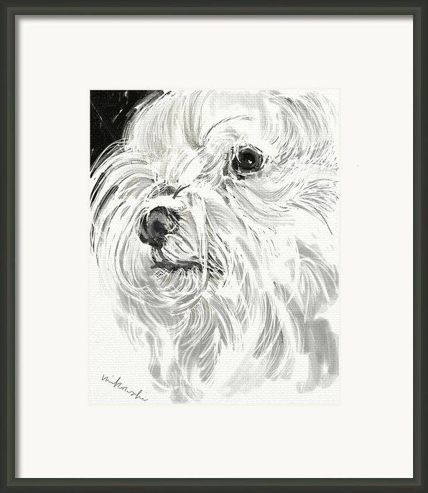 Harley The Maltese Framed Print By Linda Minkowski