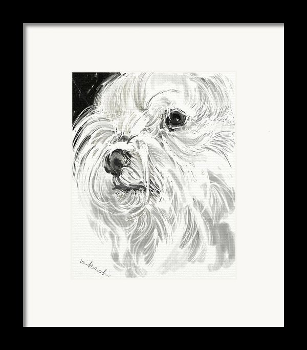 Harley The Maltese Framed Print By Linda Minkowski