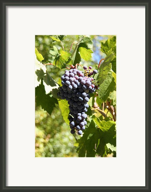 Harvest Red Framed Print By Lucy Basch