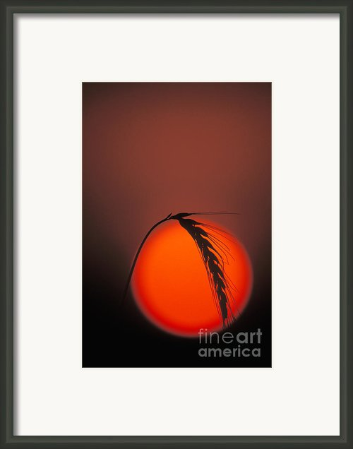 Harvest Sunset - Fs000416 Framed Print By Daniel Dempster