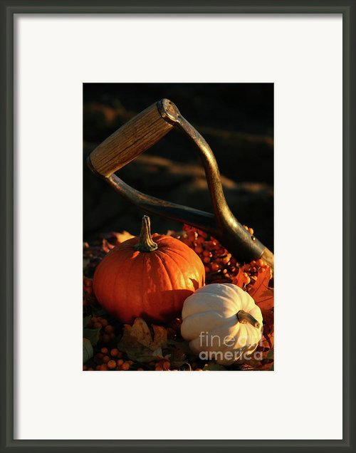 Harvesting For Thanksgiving Framed Print By Sandra Cunningham