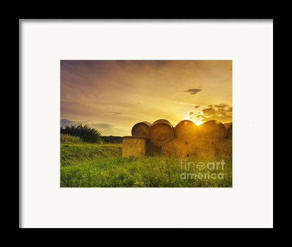 Hay Bales Framed Print By Jelena Jovanovic