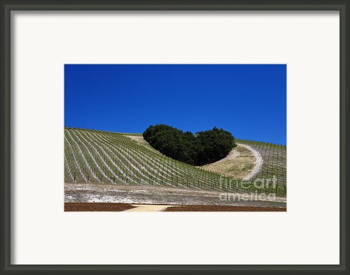 Heart Hill Paso Robles Framed Print By Jason O Watson