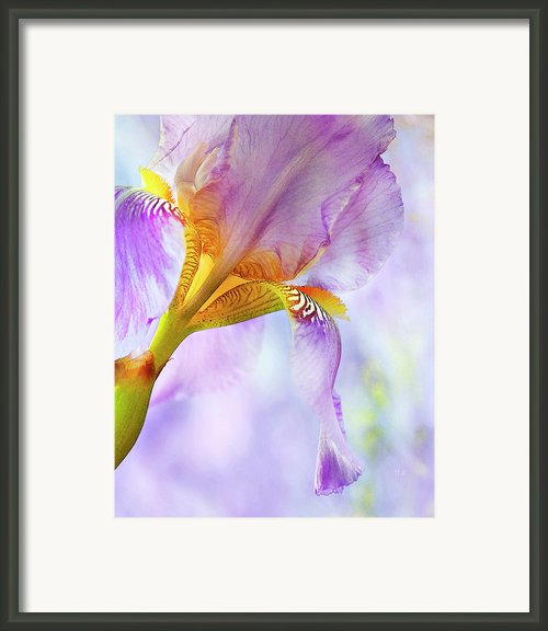 Heavenly Iris 2 Framed Print By Theresa Tahara
