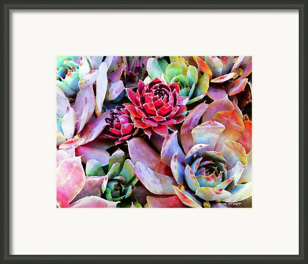 Hens And Chicks Series - Copper Tarnish  Framed Print By Moon Stumpp