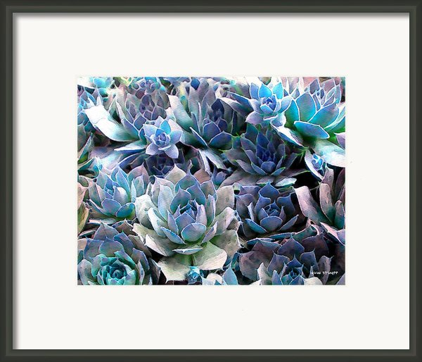 Hens And Chicks Series - Evening Light Framed Print By Moon Stumpp