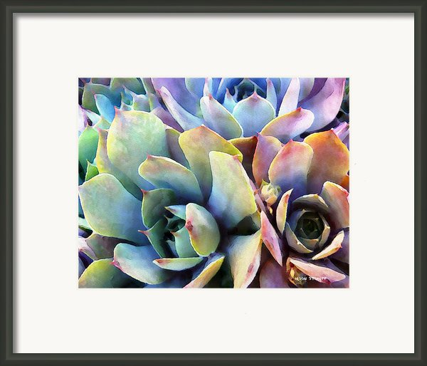 Hens And Chicks Series - Soft Tints Framed Print By Moon Stumpp