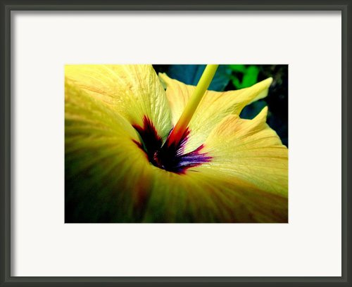 Her Majesty Framed Print By Karen Wiles