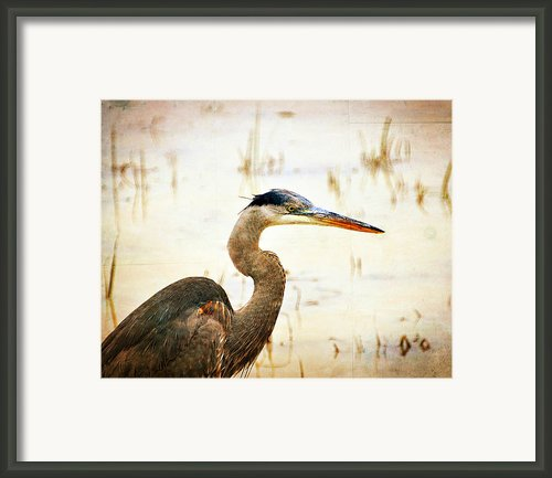 Heron 33 Framed Print By Marty Koch