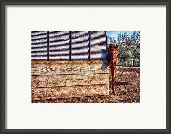 Hidden Horse Framed Print By Ian Van Schepen