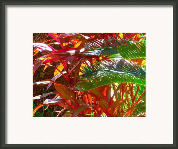 Highlights  Framed Print By Gayle Price Thomas