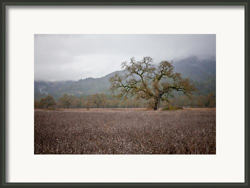Highway Oak Framed Print By Derek Selander