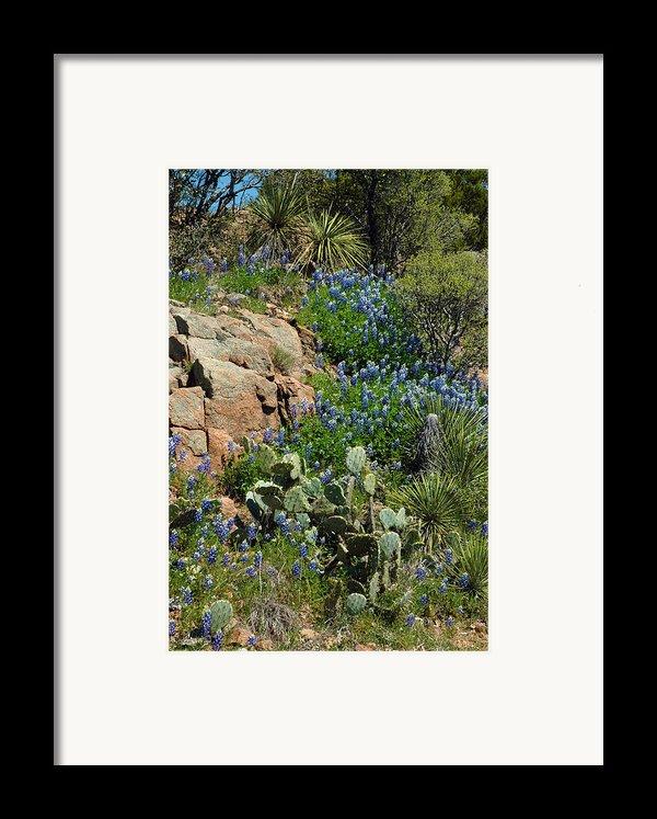 Hillside Blue Framed Print By Robert Anschutz