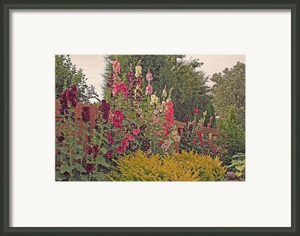 Hollyhocks Framed Print By Kay Novy