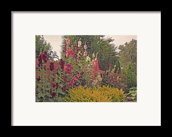 Hollyhocks Framed Print By Kay Novy