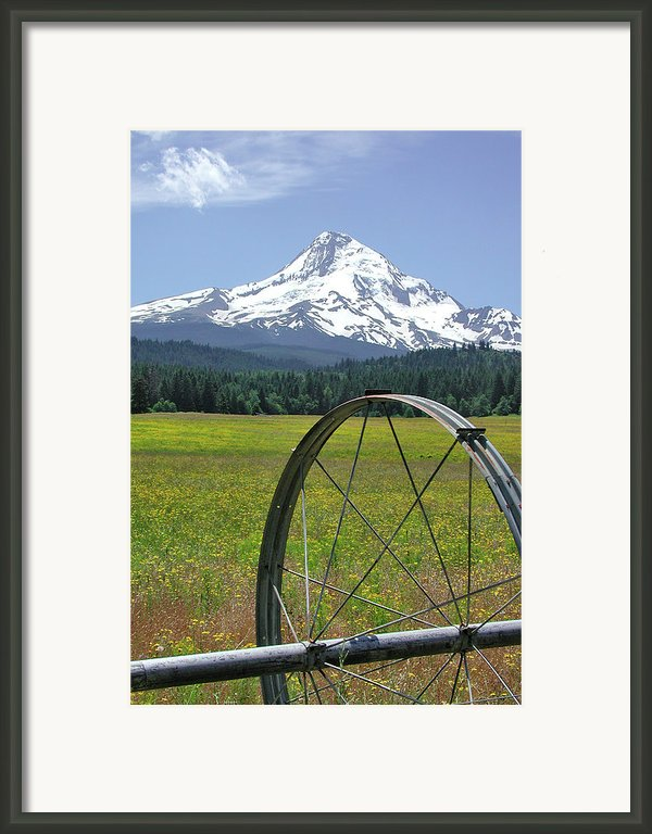 Hood Meadow Framed Print By Arthur Fix