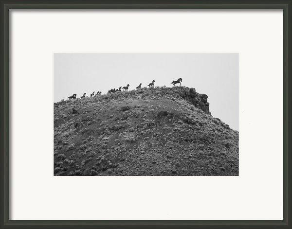 Horizon Horse Framed Print By Paul Bartoszek