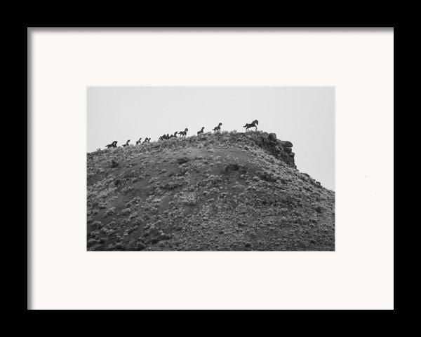 Horizon Horse Framed Print By Paul Bartoszek