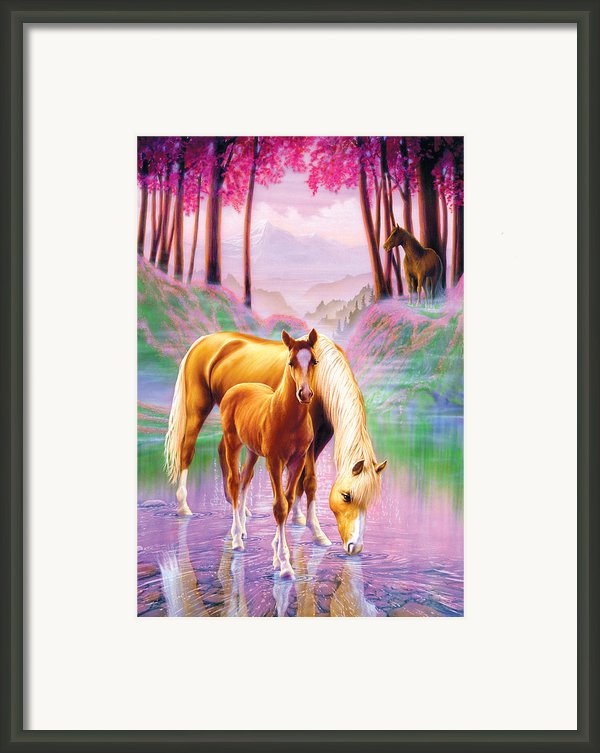 Horse And Foal Framed Print By Andrew Farley