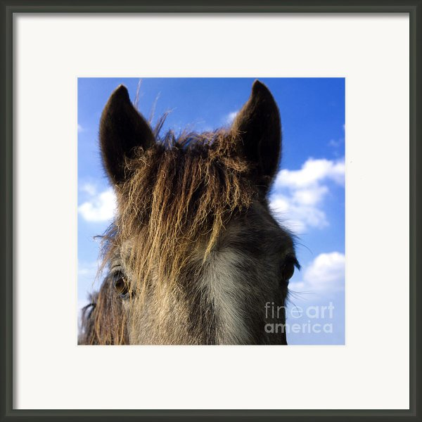 Horse Framed Print By Bernard Jaubert