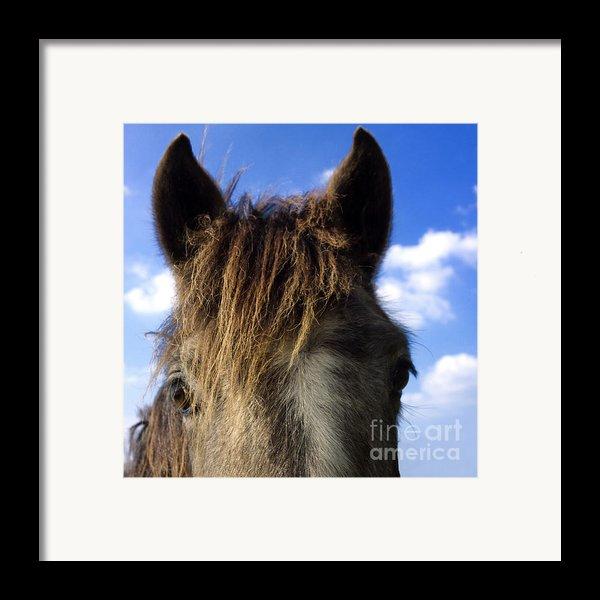 Horse Framed Print By Bernard Jaubert