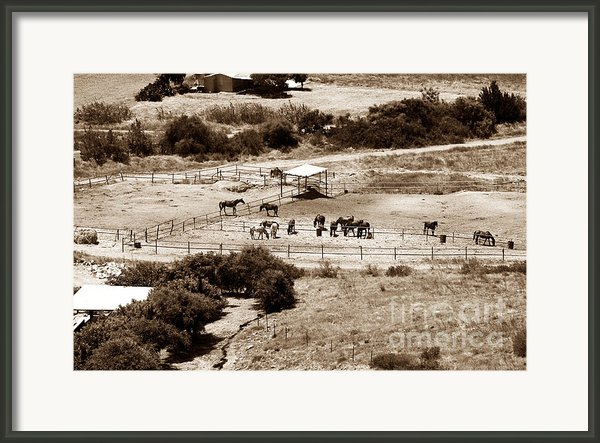 Horse Farm At Kourion Framed Print By John Rizzuto