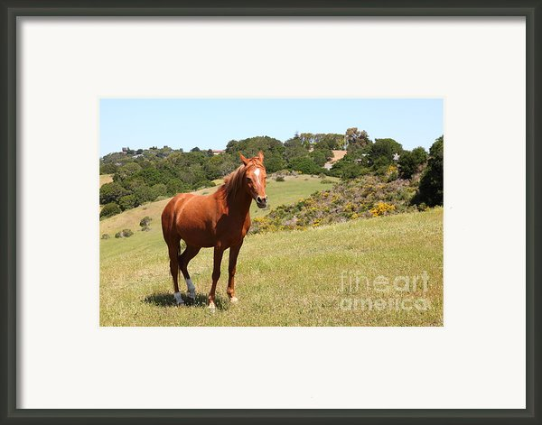 Horse Hill Mill Valley California 5d22679 Framed Print By Wingsdomain Art And Photography