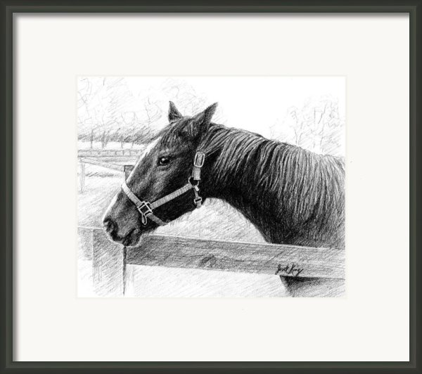 Horse In Franklin Tn Framed Print By Janet King