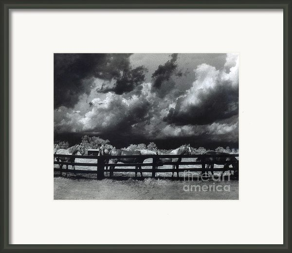 Horses Black And White Infrared Stormy Sky Nature Landscape Framed Print By Kathy Fornal