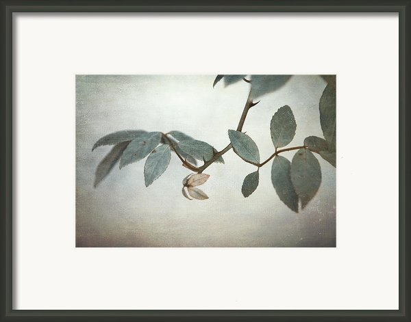 How Delicate This Balance Framed Print By Laurie Search