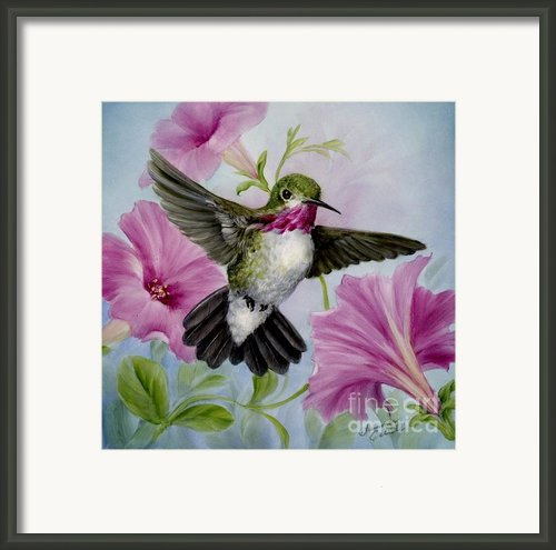 Hummer In Petunias Framed Print By Summer Celeste