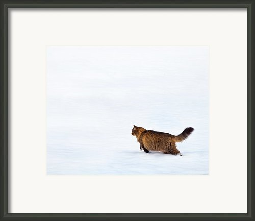 Hunter At Work Framed Print By Theresa Tahara