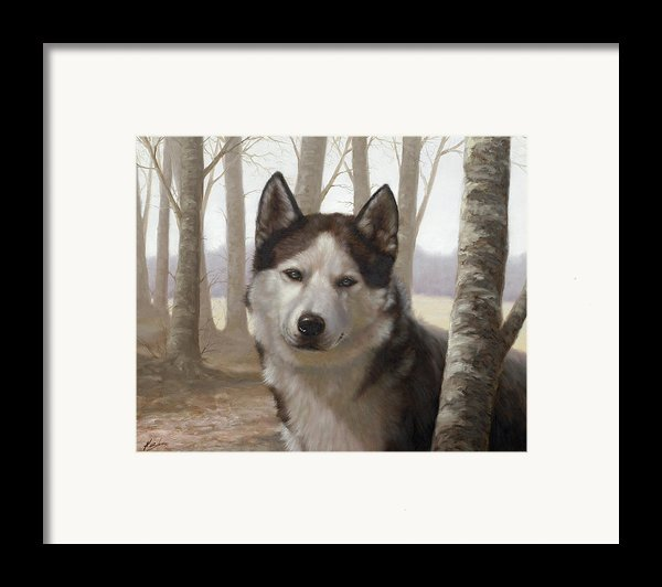 Husky In The Woods Framed Print By John Silver