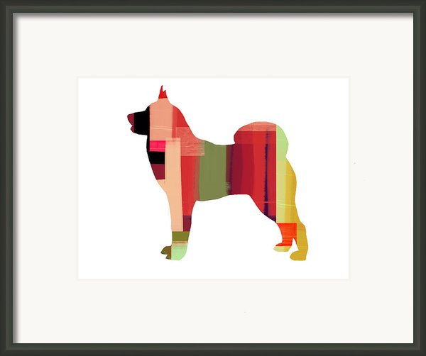 Husky Framed Print By Irina  March