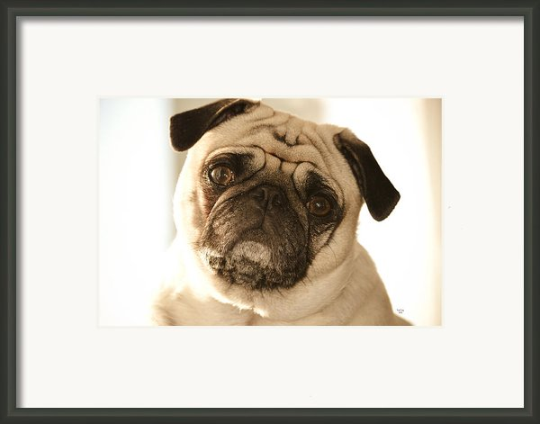I Can Be Your Lovebug Framed Print By Trish Tritz