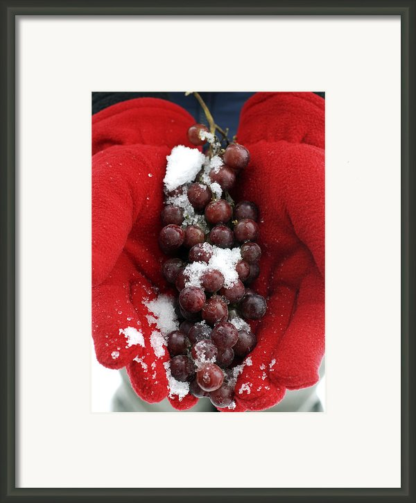 Ice Wine Grapes Framed Print By Norman Pogson