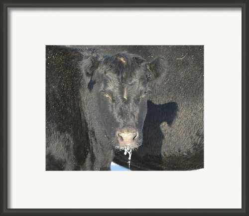 Iced Beef Framed Print By Duane Klipping