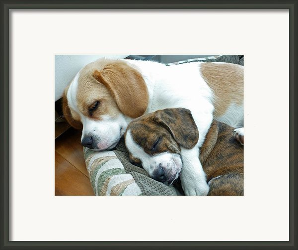 Iggy And Bogie Framed Print By Felix Concepcion