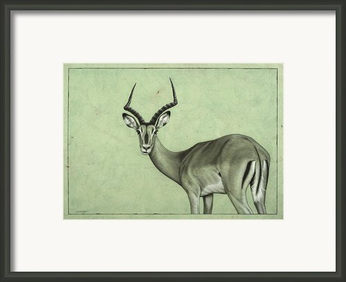Impala Framed Print By James W Johnson