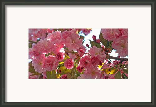 In Bloom Framed Print By Barbara Mcdevitt