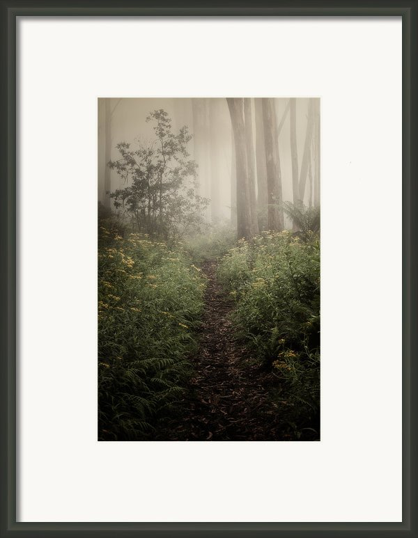 In Silence Framed Print By Amy Weiss