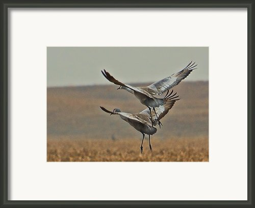 In Synch Framed Print By Don Schwartz