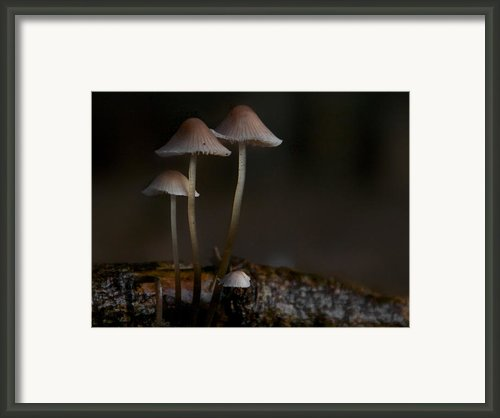 In The Dark Framed Print By Odd Jeppesen