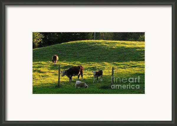 In The Field Framed Print By Randi Shenkman