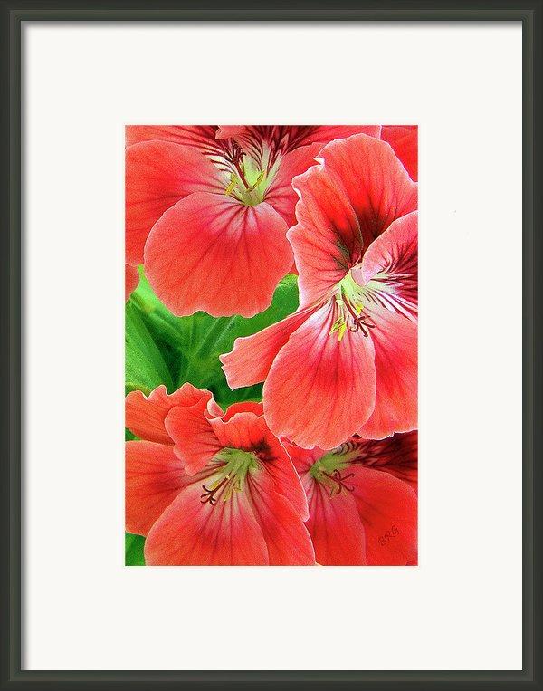 In The Garden. Geranium Framed Print By Ben And Raisa Gertsberg