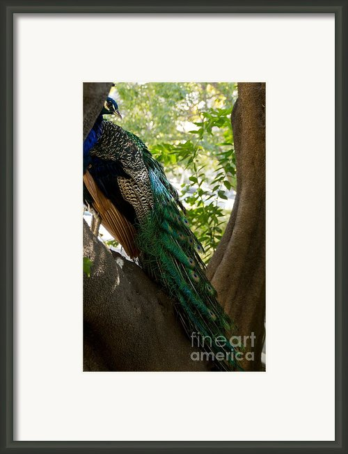 In The Shadows Framed Print By Peggy J Hughes