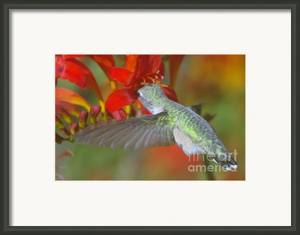 Indulgence  Framed Print By Jeff  Swan