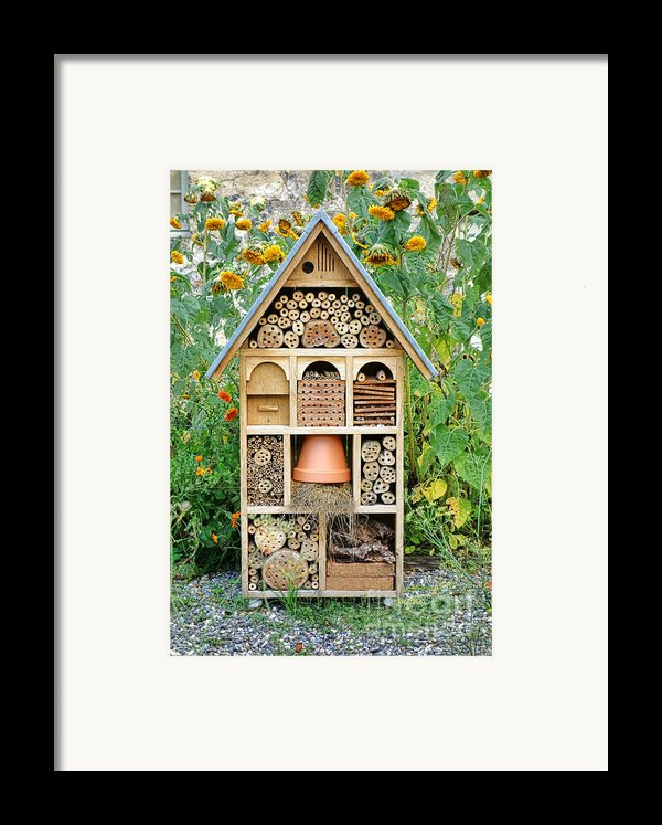 Insect Hotel Framed Print By Olivier Le Queinec